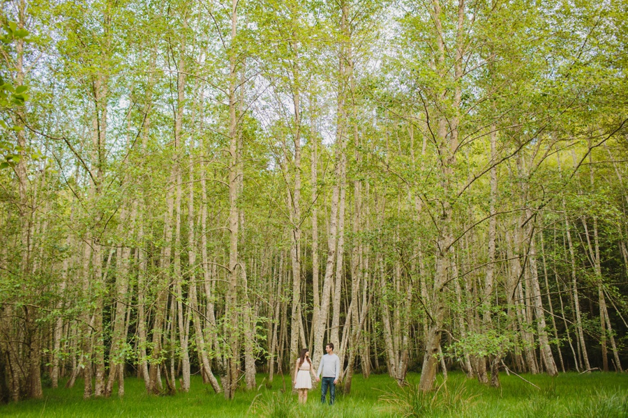 Birch Forest on Mayne Island