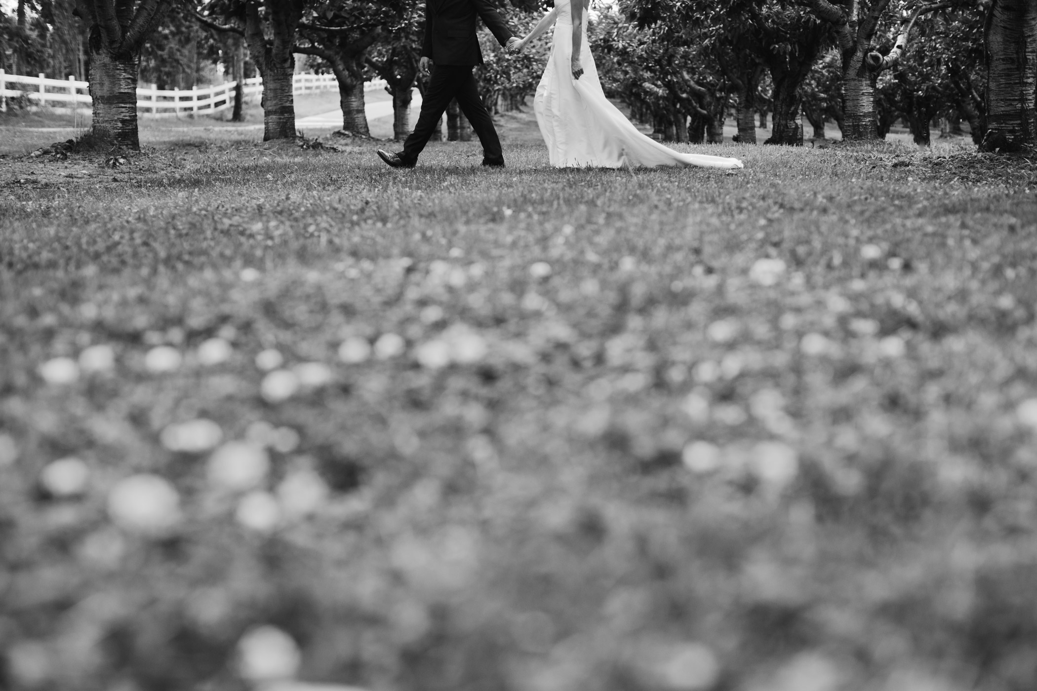 Kelowna Orchard Wedding Photography